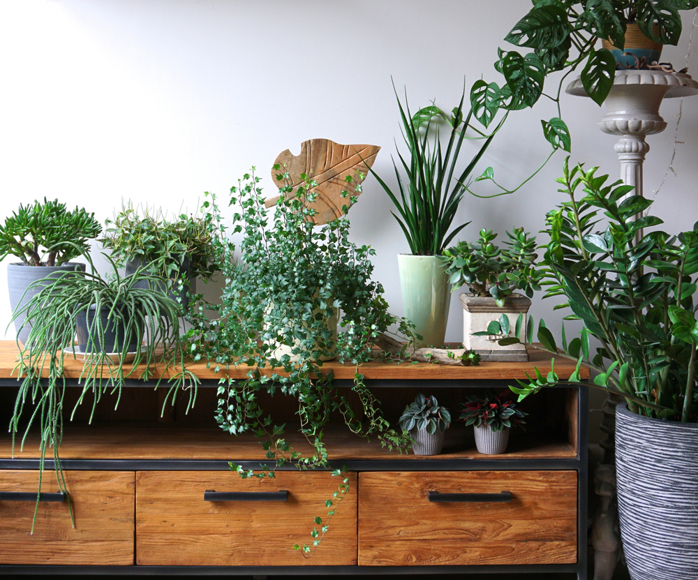 How To Move Your Plants